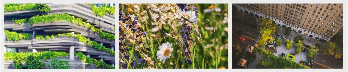 Biodiversiteit bevorderen: 10 praktische tips